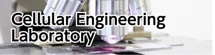 Cellular Engineering Laboratory